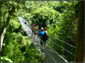 Eco Jungle Walk Suspension Bridges & Beach Break